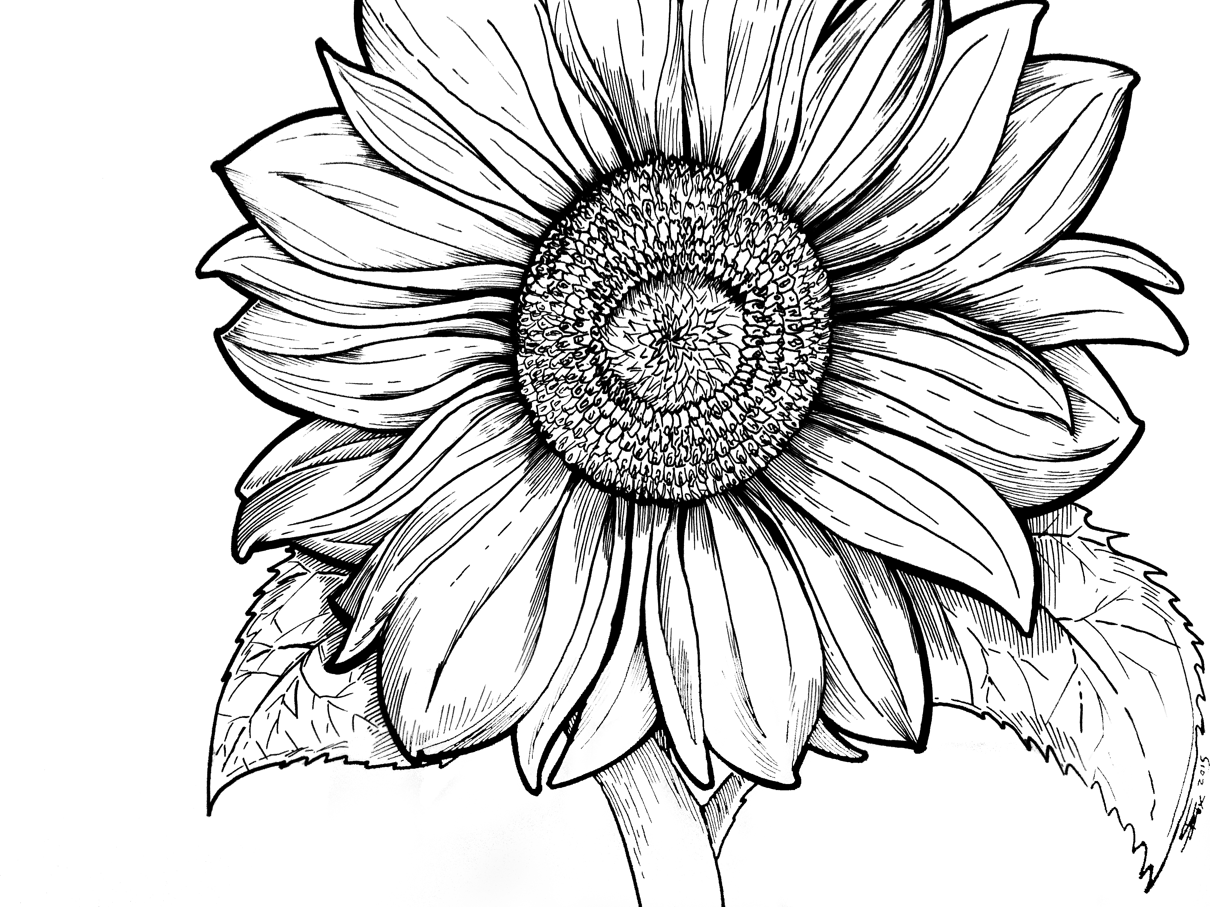 Sunflower Pictures To Color Az Coloring Pages Sunflower Mandala 5 ...
